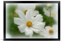 Summer Daisies. , Framed Print
