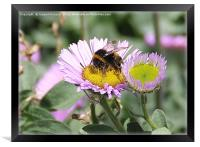 Busy Bee, Framed Print