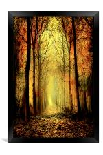 Arch of Trees, Framed Print