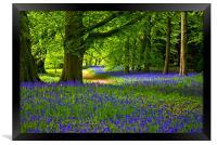 Bluebell Wood - Thorpe Perrow, Framed Print