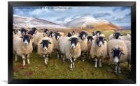 The Inquisitive Sheep, Framed Print
