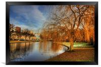 Winter Willow, Framed Print