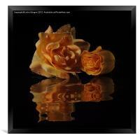 Roses., Framed Print