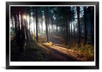 Sherwood Sunrise, Framed Print