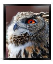 Eurasian Eagle Owl Canvases & Prints, Framed Print