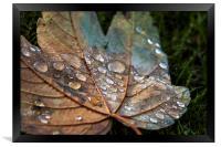 Raindrops., Framed Print