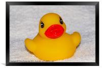 rubber duck, Framed Print