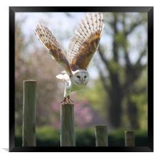 Take Off, Framed Print