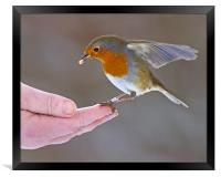 Bird in the hand, Framed Print