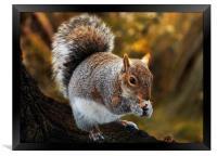 Squirrel retreat, Framed Print