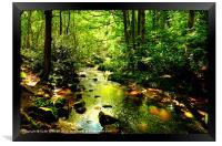 Hawksworth Woods., Framed Print