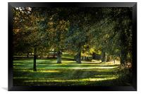 Dappled Light, Framed Print