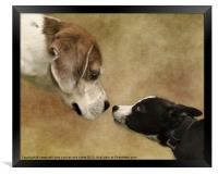 Nose To Nose Dogs, Framed Print