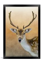 Fallow Deer Stag, Framed Print