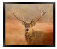 Red Deer Stag , Framed Print