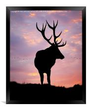 Stag And Sunset , Framed Print