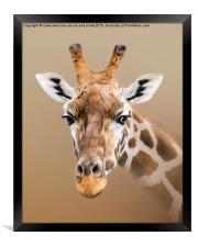 Beautiful Giraffe , Framed Print
