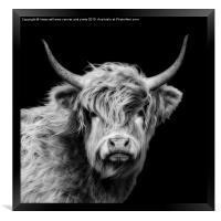 Highland Cow Portrait, Framed Print