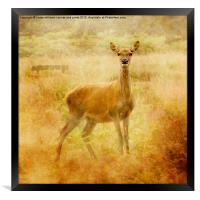 Doe A Deer, A Female Deer, Framed Print