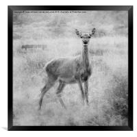 Red Deer, Framed Print