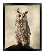 Birds Of Prey. Long Eared Owl, Framed Print