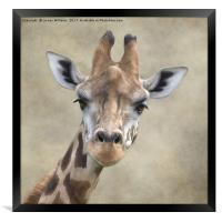 Giraffe Portrait, Framed Print