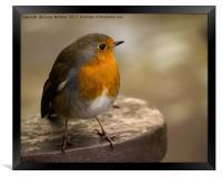 The Robin, Framed Print