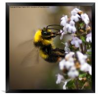 Buzzzzzzzzzzing Around, Framed Print