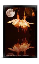 The Flower and the Moon, Framed Print
