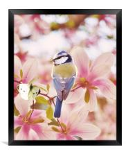 Blossom buddies, Framed Print
