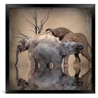 The Herd, Framed Print