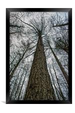 Reach For The Sky, Framed Print