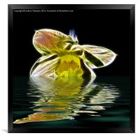 Watery Petals, Framed Print