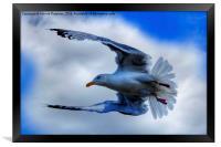 Seagull, Framed Print