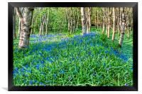 Bluebells in the Woods, Framed Print