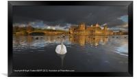 Swan at Caerphilly Castle, Framed Print
