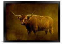 Highlander, Framed Print
