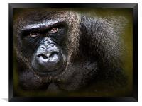 Gorilla, Framed Print
