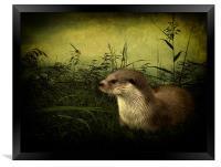 Otter, Framed Print