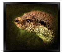 Otter, Lutra lutra., Framed Print