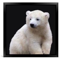 Polar Bear Cub, Framed Print