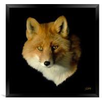 Red Fox, Framed Print