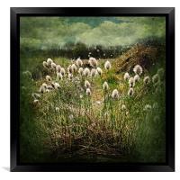Cotton Grass, Framed Print