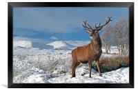 Deer Stag, Glencoe, Framed Print