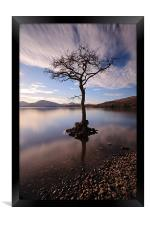 Lone tree in water, Framed Print