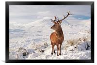 Deer Stag in the snow, Framed Print