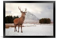 Deer Stag, Framed Print