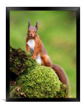 Red Squirrel, Framed Print