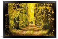 Autumn Leaves, Framed Print