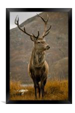 Monarch of the Glen, Framed Print